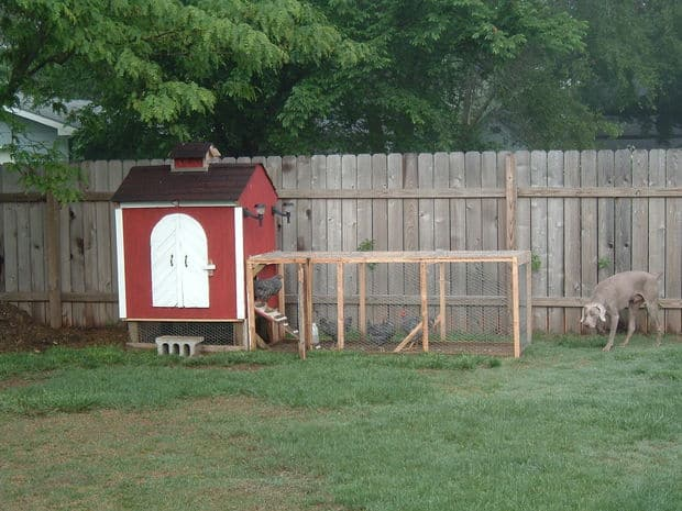 The Backyard Chicken Run Coop Idea