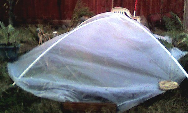The $10 Simple Homemade Greenhouse Plan
