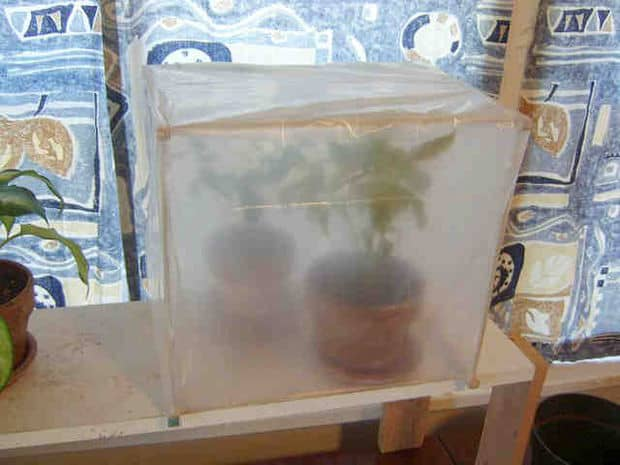 The Free Covered Indoor Greenhouse Idea