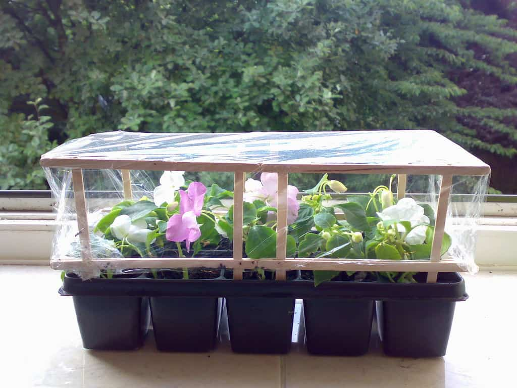 Awesome The Wood Stirrer Micro Greenhouse Design
