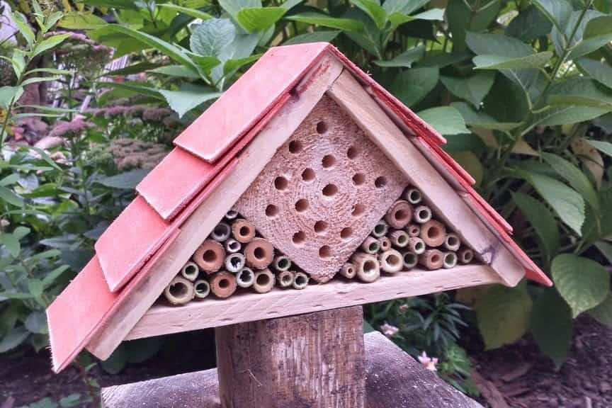 9 DIY Carpenter Bee Trap Plans [Free List]