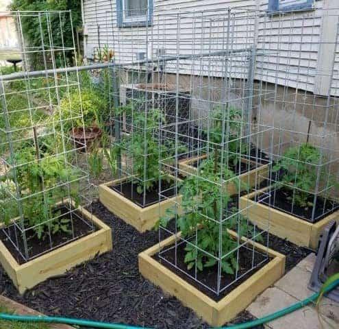 diy tomato cage plans