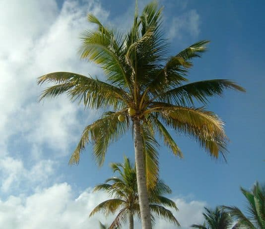 33 Types Of Palm Trees And How To Care For Them