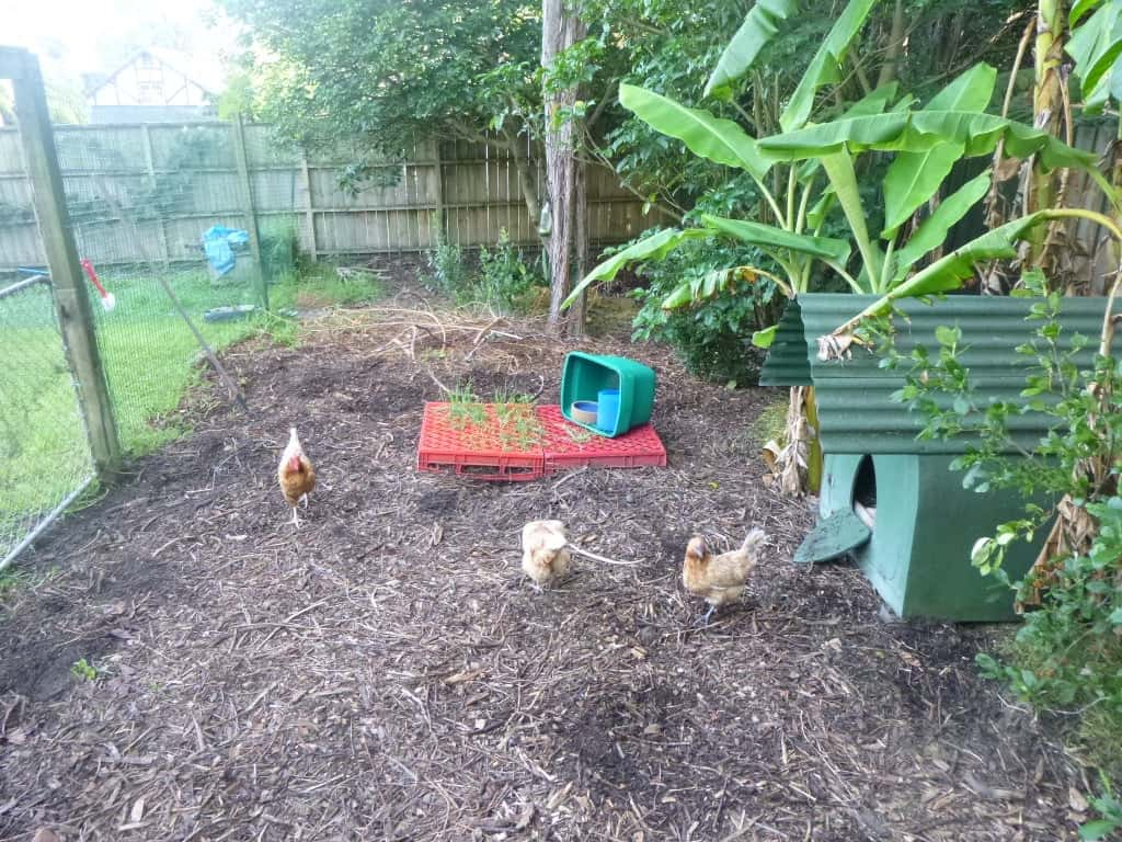 Build a Gothic Chicken Coop or Dog Kennel or Pig House
