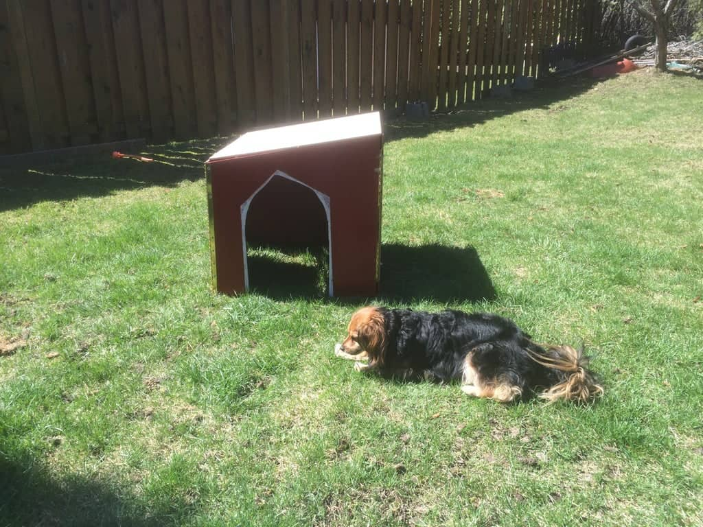 Collapsible Dog House