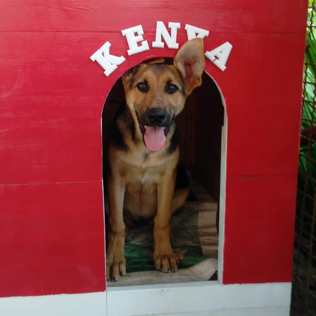 Easy to Build and to Clean Dog House