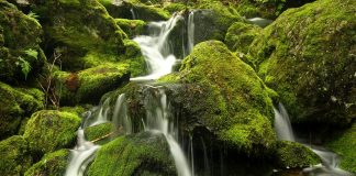 21 Types Of Moss And How To Care For Them