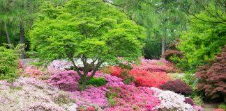 23 Azalea Varieties