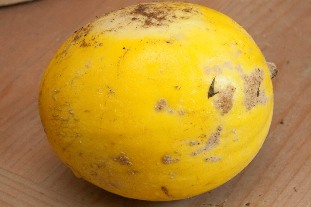 Canary (Cucumis melo var. Inodorus 'Canary')