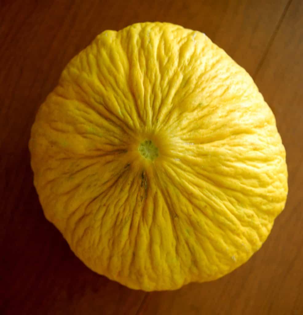 Casaba (Cucumis melo var. Inodorus 'Golden Casaba')