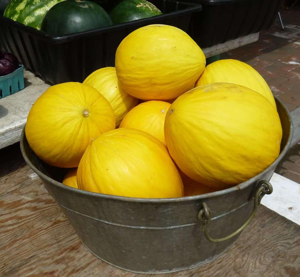 Crenshaw (Cucumis melo var. Inodorus 'Crenshaw')