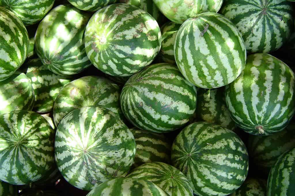 Watermelon (Citrullus lanatus)